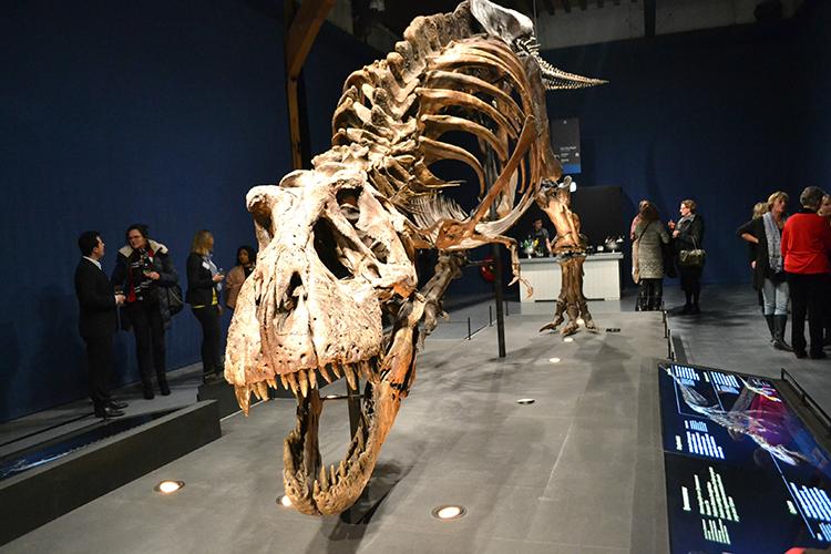 T-rex Trix in Naturalis Leiden