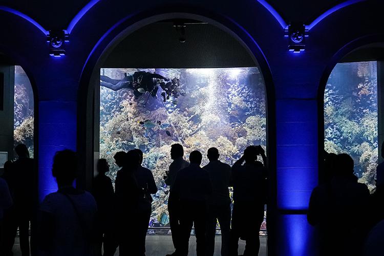 Rif aquarium van de Antwerpse ZOO